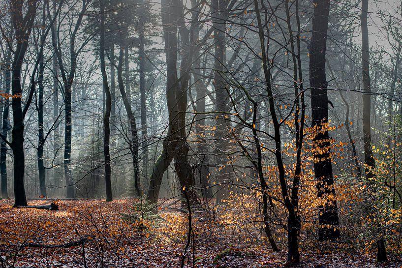 Mist in de bossen bij Auterlitz van Atelier van Saskia