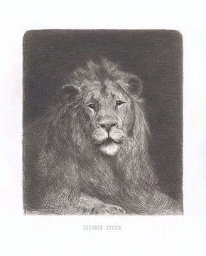 Hoofd van een leeuw van Jan van Essen, 1864 - 1936