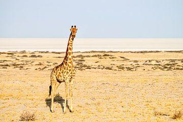 De Giraf bekijkt ons even. van Merijn Loch
