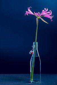 Stilleven bloem in vaas van Ineke Huizing