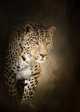 Leopard sur Diana van Tankeren
