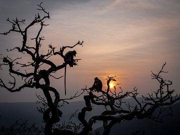 Apen Silhouetten in de Bomen van Pushkar India van Rik Pijnenburg