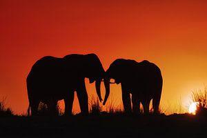 Silhouet van twee olifanten in de ondergaande zon