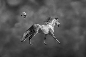 Freiheit / Freiheit von Henk de Boer