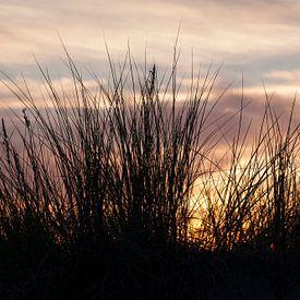 Rostock-Warnemuende : Duingrassen op het strand bij schemering van Torsten Krüger