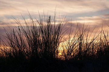 Rostock-Warnemuende : Dünengräser am Strand bei Abendd�mmerung von Torsten Krüger