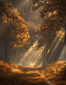Sonnenstrahlen im Herbstwald von