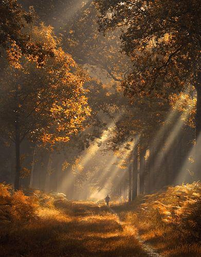 Zonnestralen in herfst bos