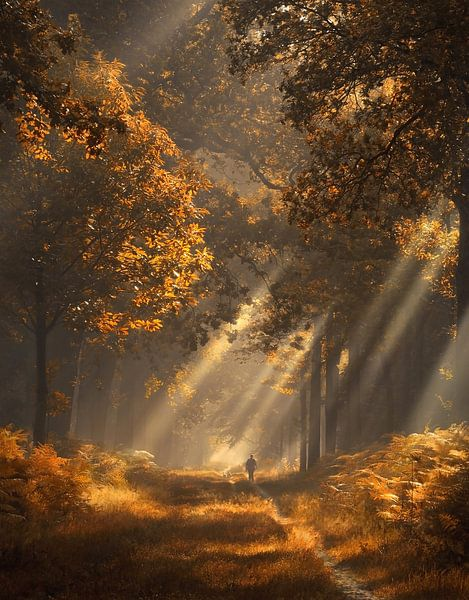 Zonnestralen in herfst bos van Rob Visser