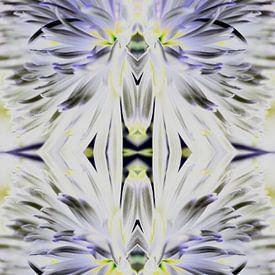 Chrysanthemum Vivid Glow van EH? by ILSEHA