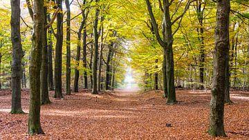Bäume in herbstlichen Farben von Hilda Weges
