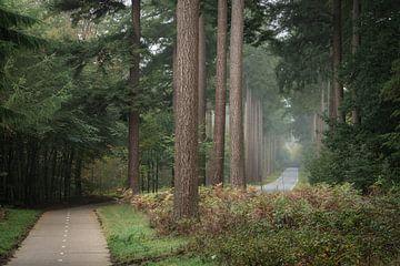 Fietspad naast de weg in het Speulderbos op een vroege ochtend in Oktober van Anges van der Logt