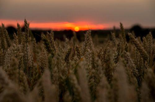 Sonnenuntergang getreidefeld  von Jasper Los