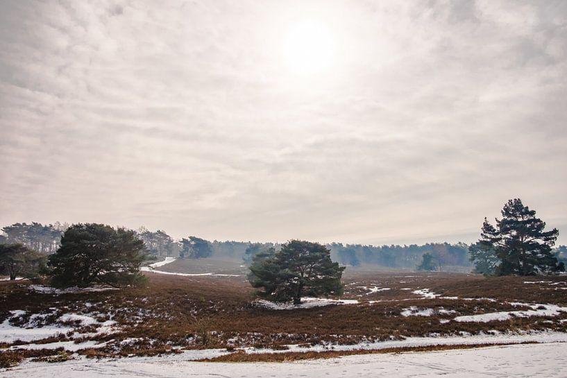 Winters heidelandschap Brunssummerheide van Heleen Pennings
