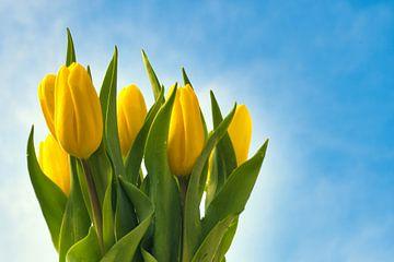 Frisse gele tulpen in de buitenlucht van J..M de Jong-Jansen