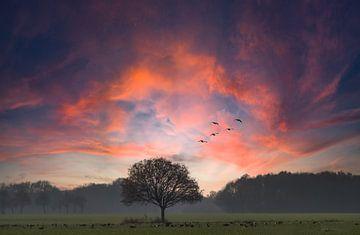 Sonnenuntergang mit Baum von Arie Flokstra Natuurfotografie