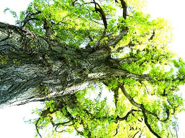 Tree Magic 127 van MoArt (Maurice Heuts)