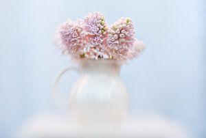 Roze hyacint van