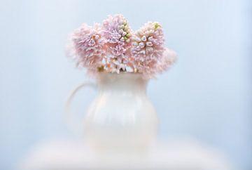 Roze hyacint sur Alexandra Bijl