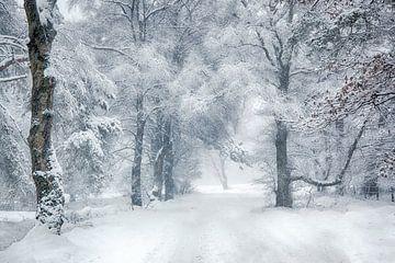 winter wonderland Veluwe von Elroy Spelbos