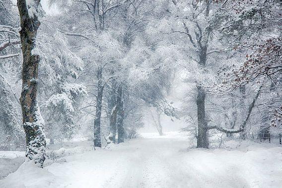 winter wonderland Veluwe