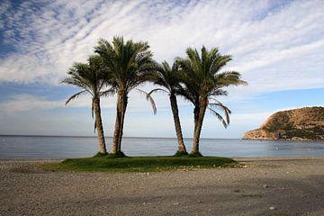 Het Groepje Palmbomen von Cornelis (Cees) Cornelissen