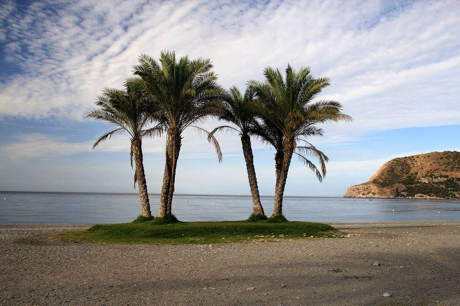Het Groepje Palmbomen van Cornelis (Cees) Cornelissen