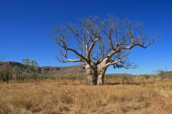 Baobab van Antwan Janssen