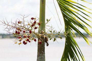 Tropische planten langs de Suriname rivier van rene marcel originals