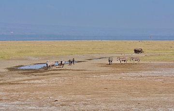 wild in Afrika/Kenia van