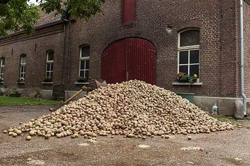 un gros tas de pommes de terre sur Compuinfoto .