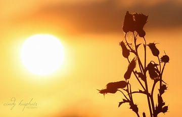 zonsondergang van cindy kuiphuis