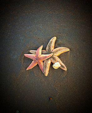 Zeesterren op het strand von Toekie -Art