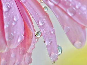 Blüte Sommertau