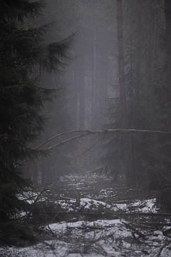 Mistig bos met sneeuw op de grond van