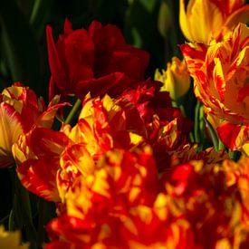 Geel met rode tulpen van Margreet Frowijn