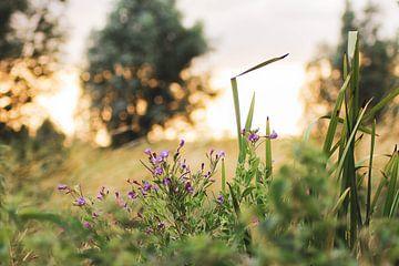 Schoonheid van de natuur van Iris Beukelman