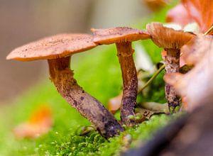 Herfst - paddenstoelen