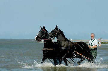 Paarden in zee Ameland van Brian Morgan