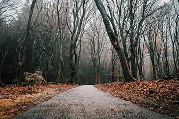 Tanzende Bäume im Wald von Speulder und Sprielderbos von Björn van den Berg