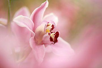 Orchid von Yvonne van Dormolen