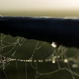 Spinnenweb aan een hek van Kees van der Rest