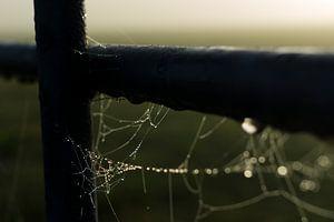 Spinnenweb aan een hek