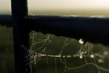Spinnenweb aan een hek von Kees van der Rest