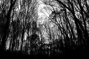 Geisterwald von Eva Masselink