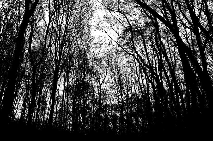Spookachtig bos van Eva Masselink