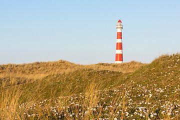 Leuchtturm und Dünenrose - Natürliches Ameland von Anja Brouwer Fotografie