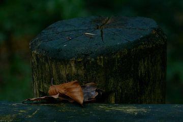 Eenzame blaadjes van Kai Grijff