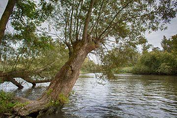 Dans le Biesbosch