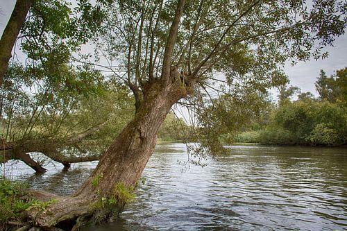 In de Biesbosch